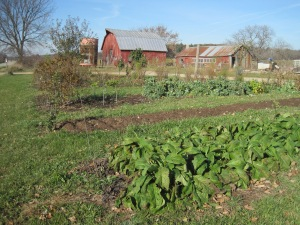 Garden patches in front of barn