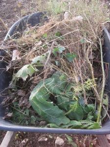 Weeds in wheelbarrow