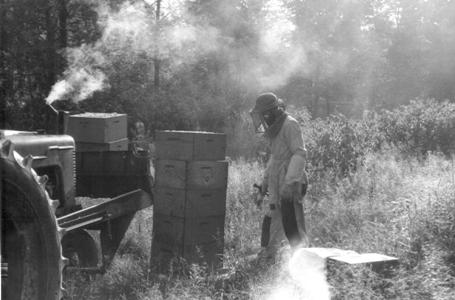 Photograph of smoking the bees