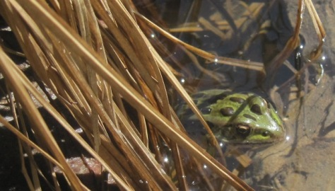 The early frog catches the fly