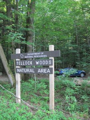 Tellock Woods