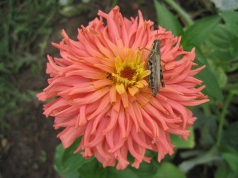 Grasshopper, September 1