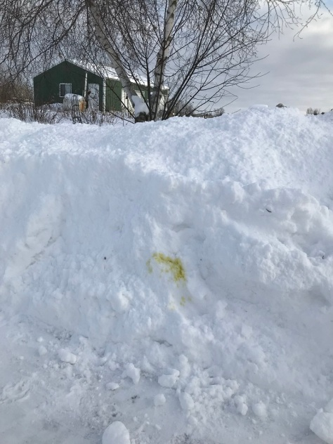 Photo of snow pile with dog urine on it